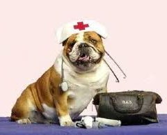 K9 First Aid