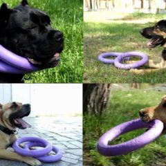 Puller Interactive Training Toy