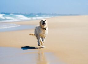 Dog Friendly Beaches in Andalusia
