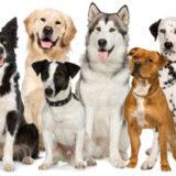 Fuengirola Dog Training